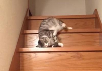 まるで液体?ぐにゃぐにゃと階段をおりる猫