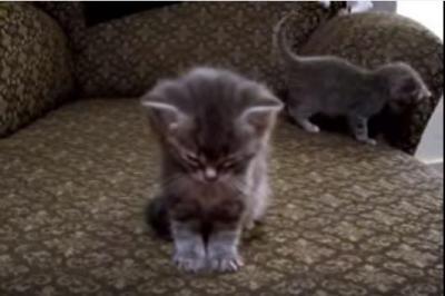 眠りに落ちる子猫、まわりの雑踏にも勝つ睡魔