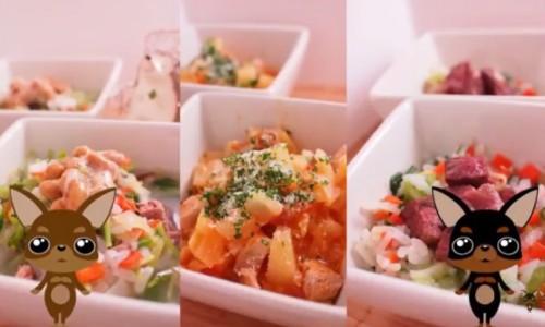 tomatoudon2