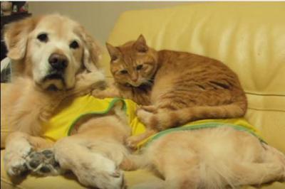 猫のベッドは犬のお腹、暖かいニャ~