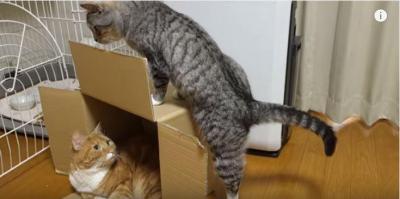 段ボール箱の中と上に猫、その結果は・・・?