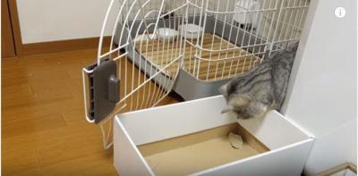 箱の中のイリュージョン?猫vs紙切れ