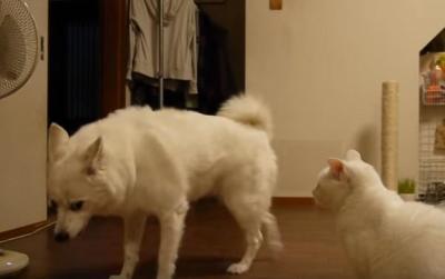 すごい迫力・・犬をたじたじにする猫