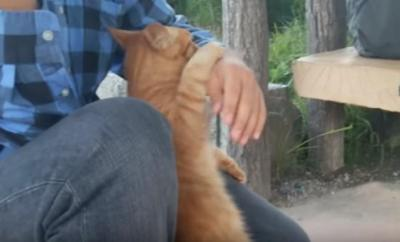 膝に乗せてもらおうと頑張る猫