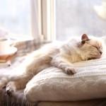 夏は熱中症に注意が必要! 猫ちゃんの暑さ対策とは?