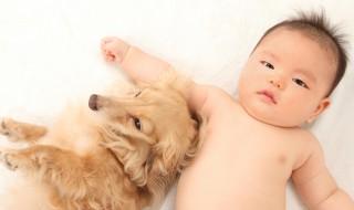 ペットと赤ちゃんが仲良く暮らしていくには?
