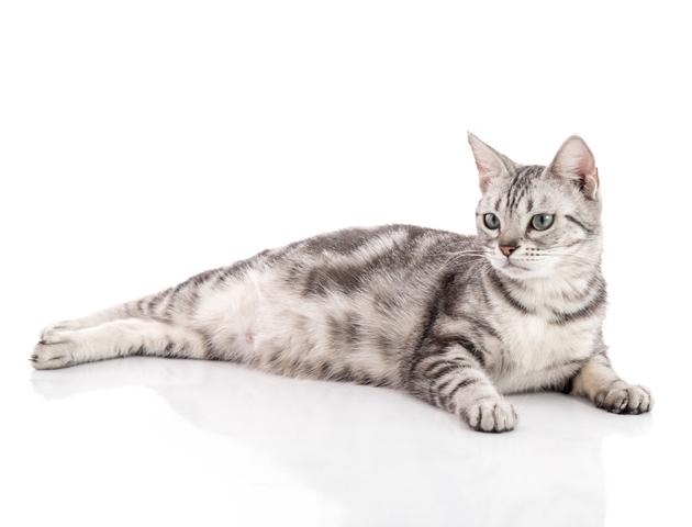 猫のお腹の気になるたぷたぷ ~「ルーズスキン」とは~