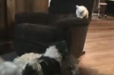 はしゃぎ回る犬たちから子猫を守る、優しい犬