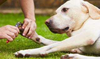 伸び過ぎや放置は危険! 愛犬の爪のお手入れ、大丈夫?