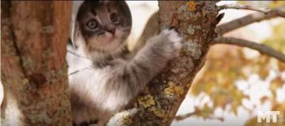 アサシンは可愛い猫たち、壮大な旅で大活躍