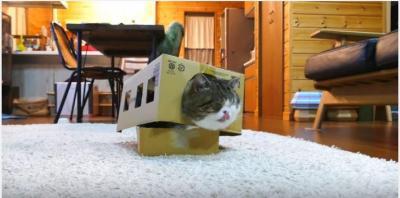 箱大好き猫・まるくん、猫バスになる