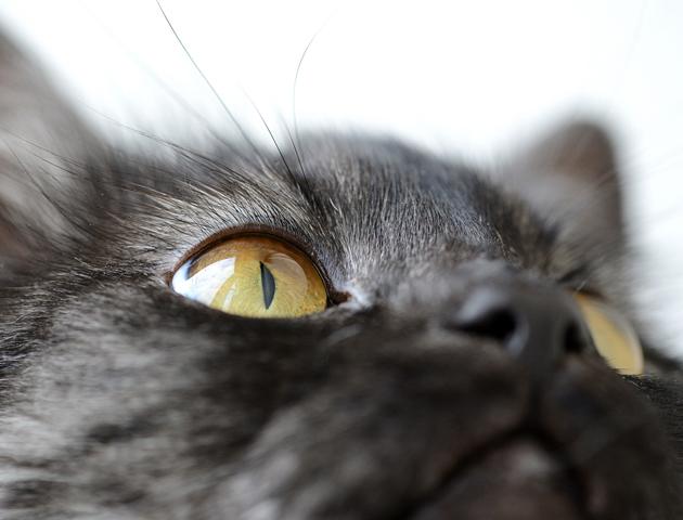 愛猫の健康管理! 目ヤニで健康状態を見極める方法は?