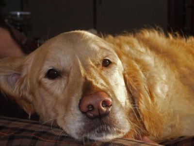 うちの犬、ひょっとして認知症?