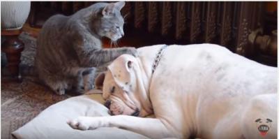 起きて~、甘える様に犬を起こす猫の結末は?