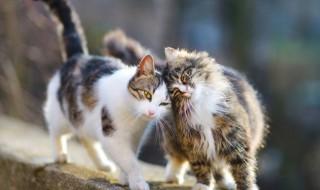 性格も違う? 猫の短毛種と長毛種の特徴とは