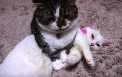 そのままでいいの??マイペースな猫たち