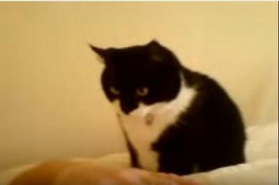 「お腹が空いたよ~」飼い主さんを起こす猫