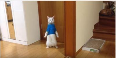 白猫の桃太郎くん、青い服で立っちも・・・