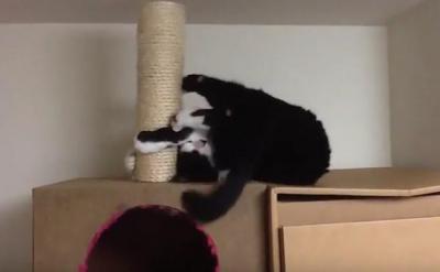 器用なの?横着なの?横たわって爪とぎする猫