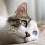 これぞ『ネコノミクス』! 猫好きにおすすめのアプリ