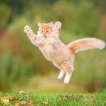 犬猫専用インスタ『ドコノコ』ってどんなアプリ?