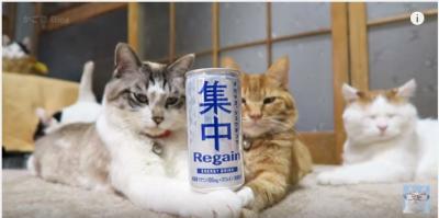 集中!猫たちは缶を倒すこと無くいられるのか?
