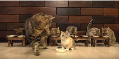 子猫と猫10匹、総勢11匹!の食事風景