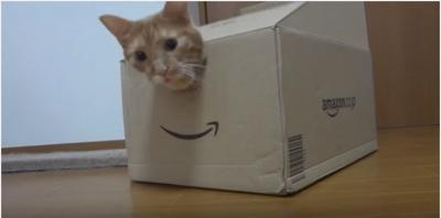 猫と箱。大きな入り口と小さな穴