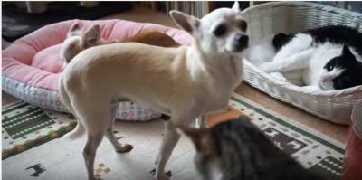 すり寄る猫に犬流ご挨拶、猫パンチの反撃