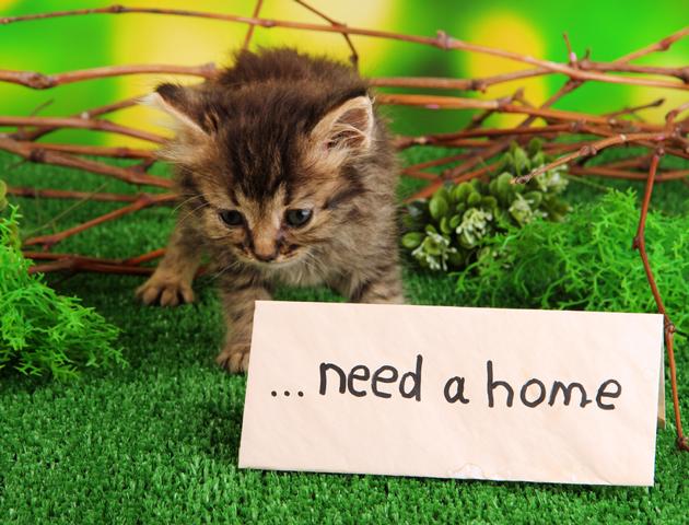 もしも捨て猫を拾ったら? 飼い方と注意すべき点