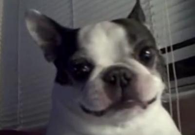 お腹を触るとおかしな声が出てしまう犬