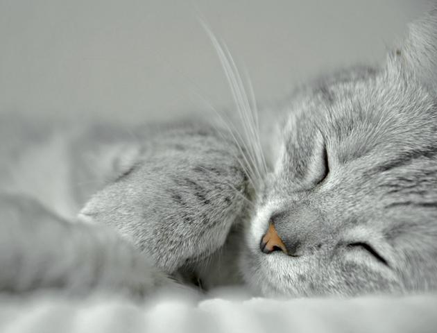 猫と一緒の布団で寝るにはどうすればいい?