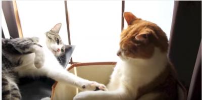 猫パンチに対して、仲直りの握手を求める猫