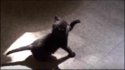 黒猫の赤ちゃん、影と追いかけっこ