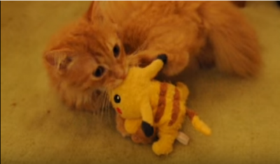 ポケモンゲットだぜ!ピカチュウvs猫