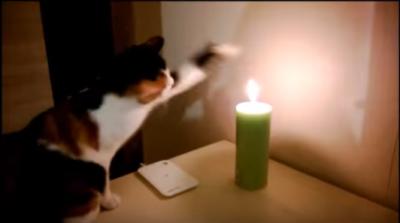 熱くない?ローソクの灯りに猫パンチ!