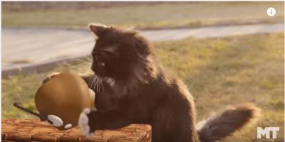 モフモフ猫がスーパーマリオに参戦!