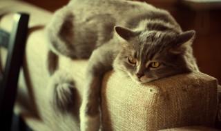 猫がストレスを感じたときに見せるサインは?