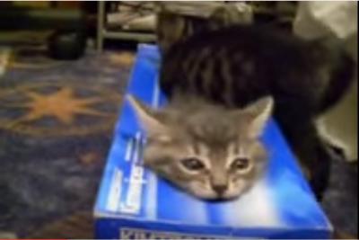 箱ティッシュを巡る、子猫たちの可愛い戦い