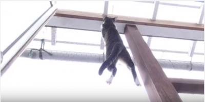 まるで忍者の様に張り付く猫
