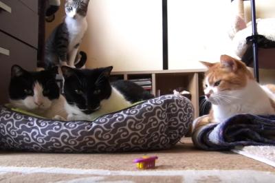 興味なし?おもちゃを見ているだけの猫たち