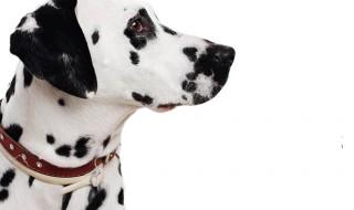犬好きなら観るべし! 犬が活躍する映画4選