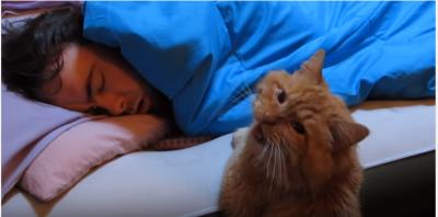起きてくれないの・・・寂しさを訴える猫
