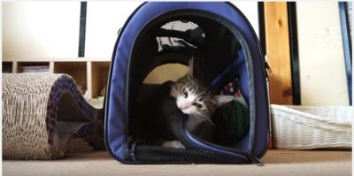 猫と飼い主、キャリーバッグでドタバタコント