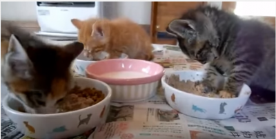 3匹の子猫「いただきます!」の後は?
