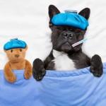 注意深く見てあげて! 犬の発熱の原因と対処法