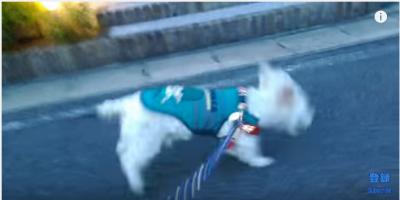 おじいちゃん犬が走る姿に涙腺が緩みます