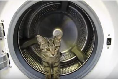 猫は器用に洗濯機のドラムを回します