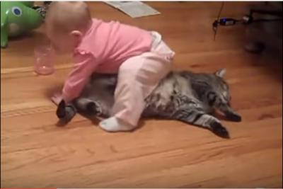 重くても痛くてもひたすら耐える猫