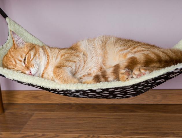 猫のいびきは体調不良かも!? いびきの原因は